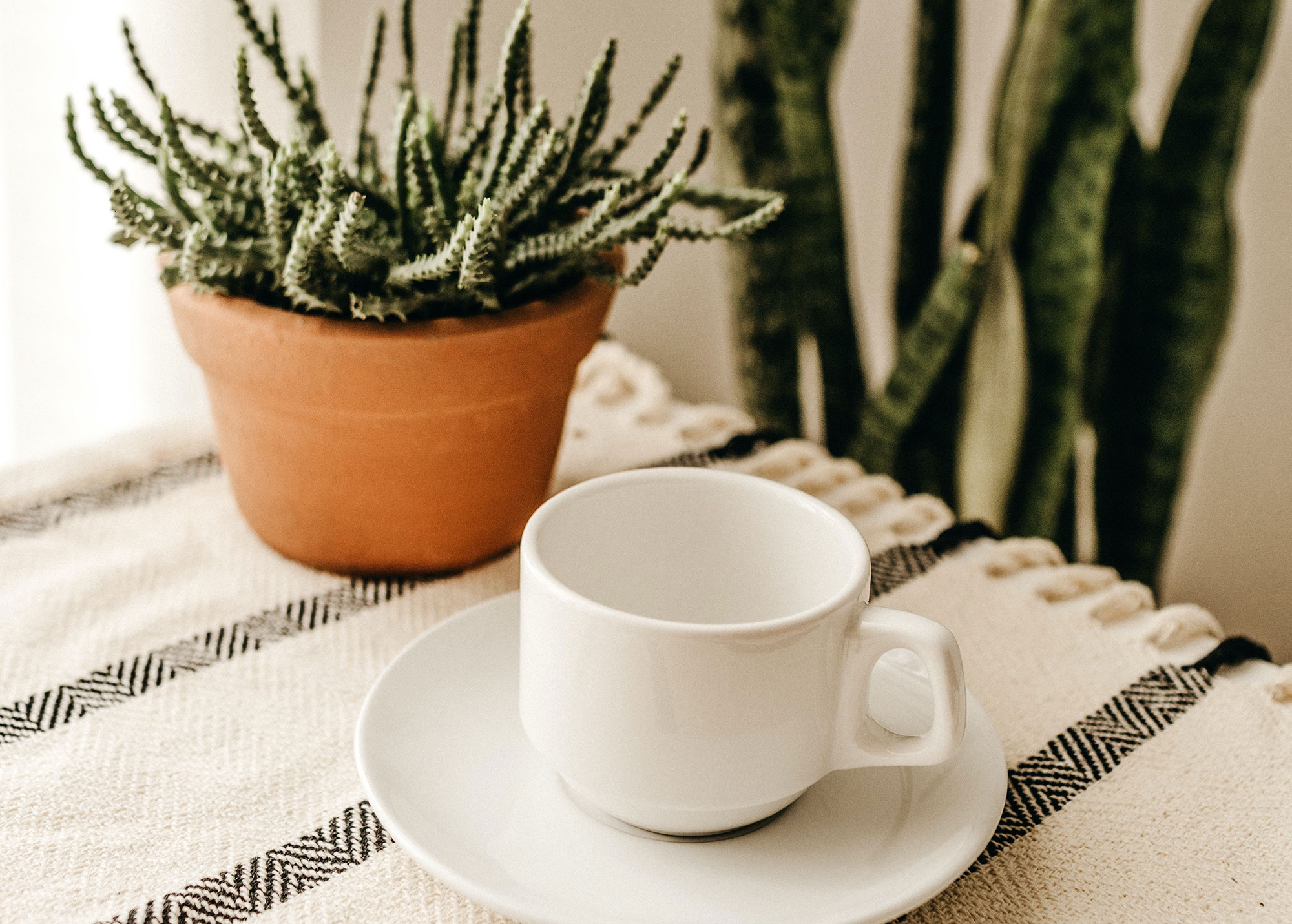 white-cup-with-saucer-1
