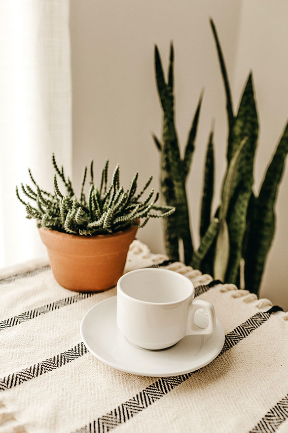 white-cup-with-saucer-2922354-2